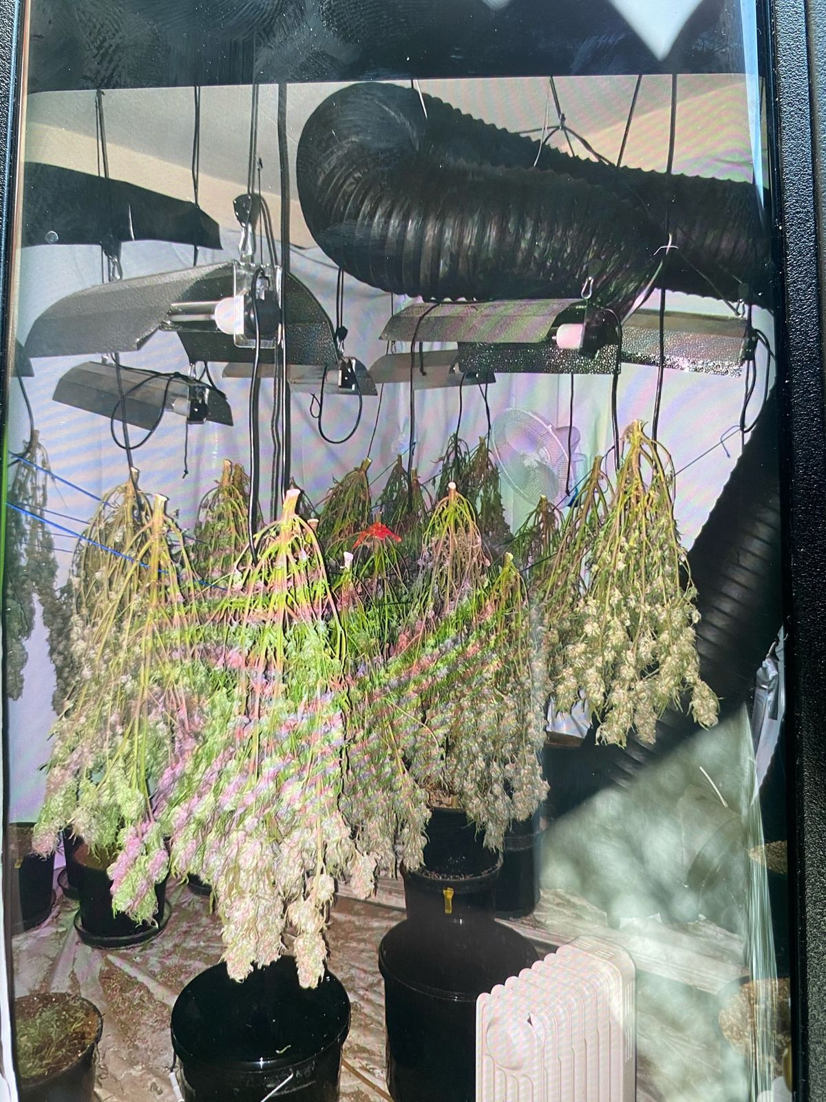 Cannabis found at the address in Littleworth Road Photo: Cannock Police