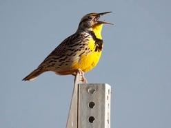 Study reveals three billion fewer birds over North America