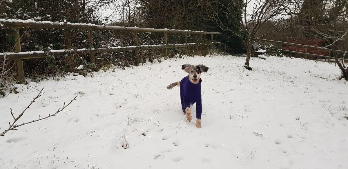 Snow dog in Leasowes Park, Halesowen. Photo: Julia Tolley