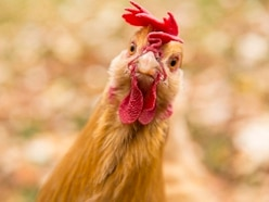 Woman arrested for claiming officer killed chicken in drive-by shooting