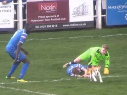Who let the dog out? Pet pawses Halesowen Town match as players dive to catch pup pitch invader - WATCH