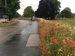 Long grass and wildflowers around Stafford divides opinion