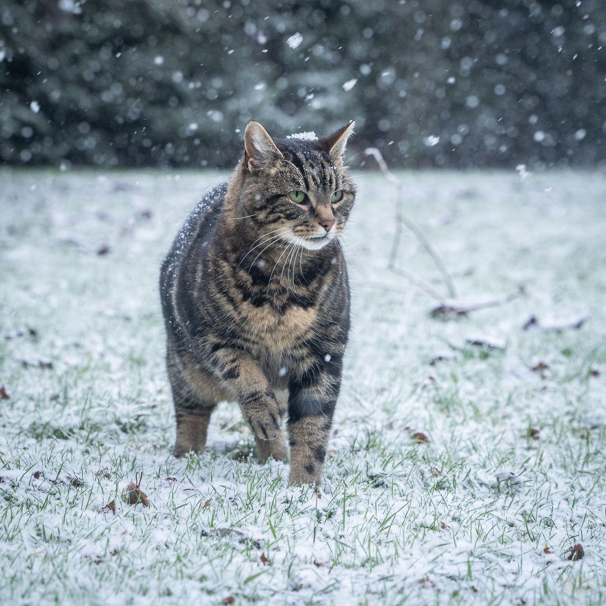 Snow in Staffordshire. Photo: Ian Knight