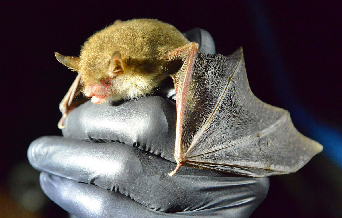 Bats are furry little creatures
