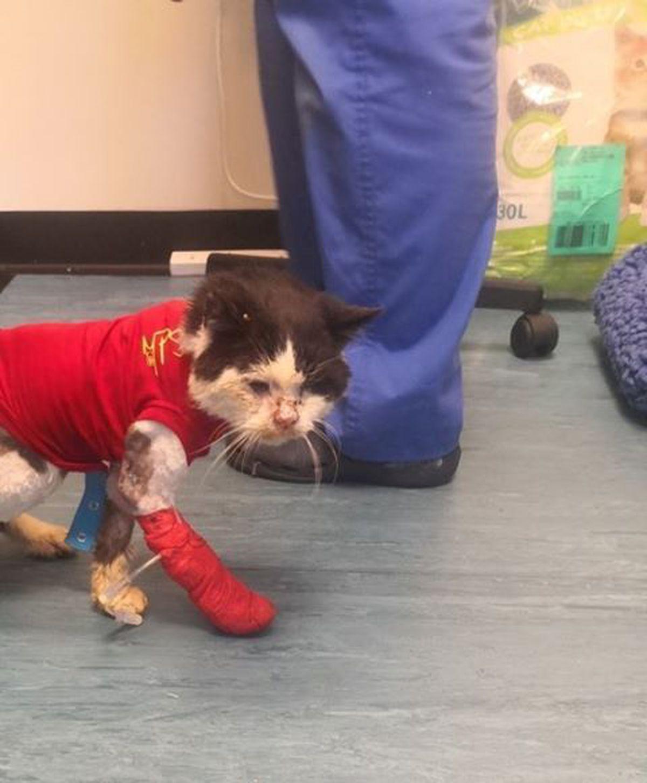 Maximus the cat
