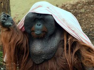 Dudley Zoo has called for the bedding to entertain its primates