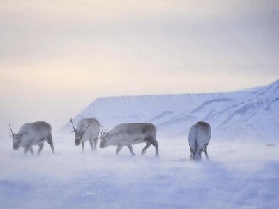 Court backs Norway's right to issue Arctic oil drilling licences