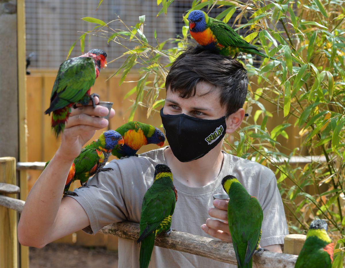 Feeding birds with nectar pots, in the new Lorikeet Lagoon, zoo keeper Ben Halsall, at Wild Zoological Park, Halfpenny Green