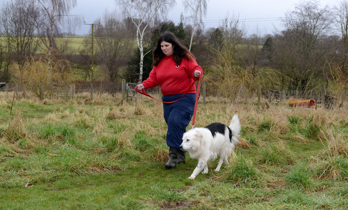 The Border Collie Trust Rescue Centre near Rugeley which have to move location because of the building of HS2 going through their land. Anna Williscroft with Laddie in part of the area which will be lost..