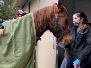 One of the horses rescued in California