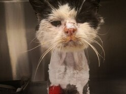 Appeal to raise funds for poorly stray cat Maximus