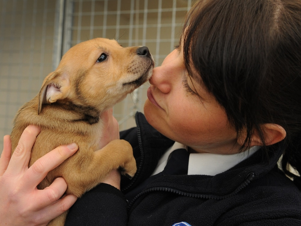 Pet rescue! Kate Parker of the RSPCA tells Weekend about her job protecting animals