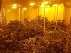 Rows of cannabis plants seized from Black Country drugs farm