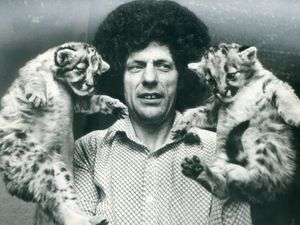 Lew Foley was surprised to find these cubs abandoned on his doorstep in June, 1976. He was not sure what type of big cat they were, although he thought they were tigers or leopards.