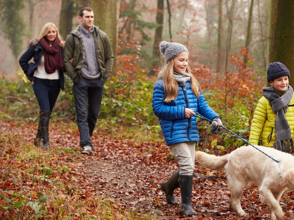 Taking a dog for a walk can be one of life's great pleasures.