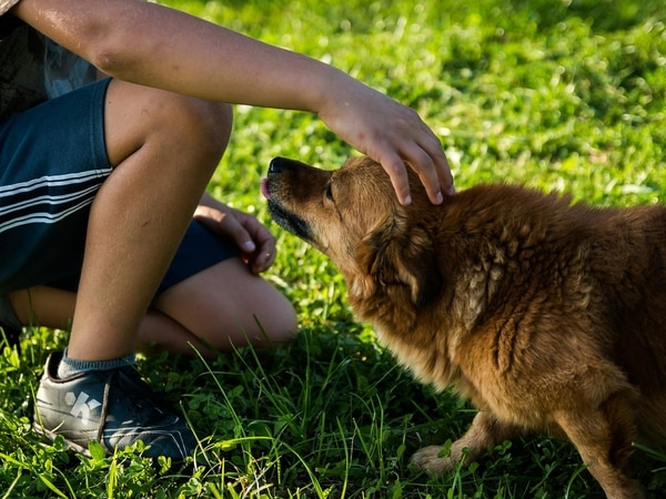 Jack Averty: Paws for thought before you get a dog
