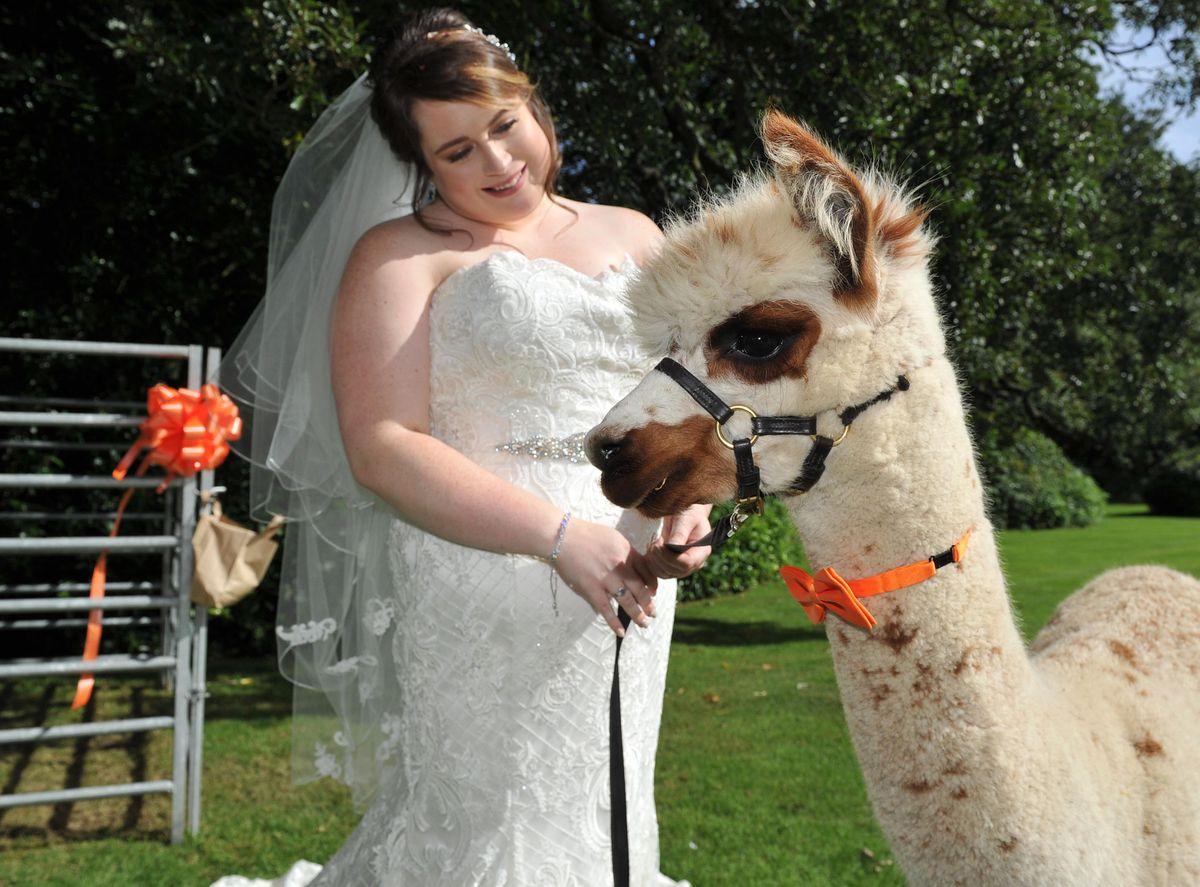 Emily with Alfie the alpaca