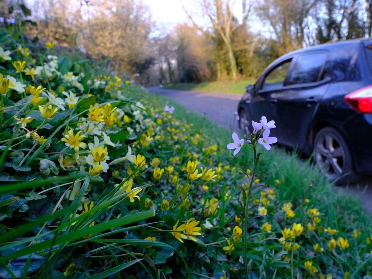 Spring flowers bloom on a roadside verge