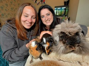 DUDLEY COPYRIGHT EXPRESS AND STAR STEVE LEATH 18/06/2021..Heathers Weekend feature:  Pic in Halesowen with Peppers Pet Rescue. Pictured here is L-R: Melanie Coley and Sophie Pepper with Guinea Pigs: Ronnie and Gary and Rabbit: Revel..