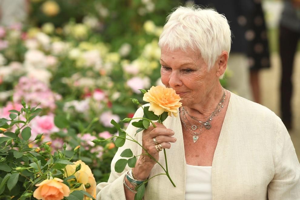Image result for rose Austin Dame Judi Dench