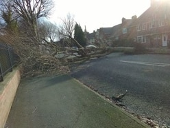 Trees crash down amid warnings of second successive stormy weekend