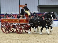 Gentle giants of the horse world return to Staffordshire