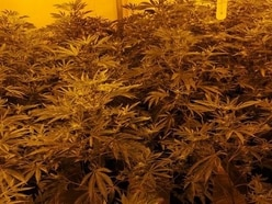 More than 300 cannabis plants seized in two police raids in Walsall