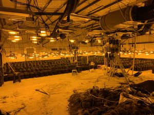 Police have uncovered a large scale cannabis farm in Kingswinford