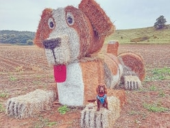 Paw-some straw dog created as part of Staffordshire scarecrow festival