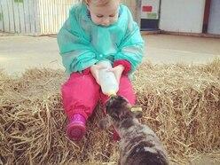 Spring lambs at Rodbaston Animal Zone