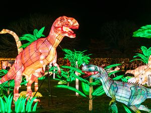 The Lantern Festival comes to West Midland Safari Park on selected dates between October and December