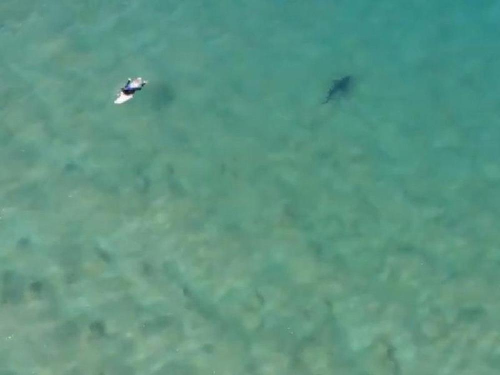 Shark bites Two British Guys on Australia's Great Barrier Reef