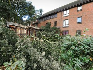 Part of the massive tree that fell, at Priory Court, Waterloo Road, Wolverhampton