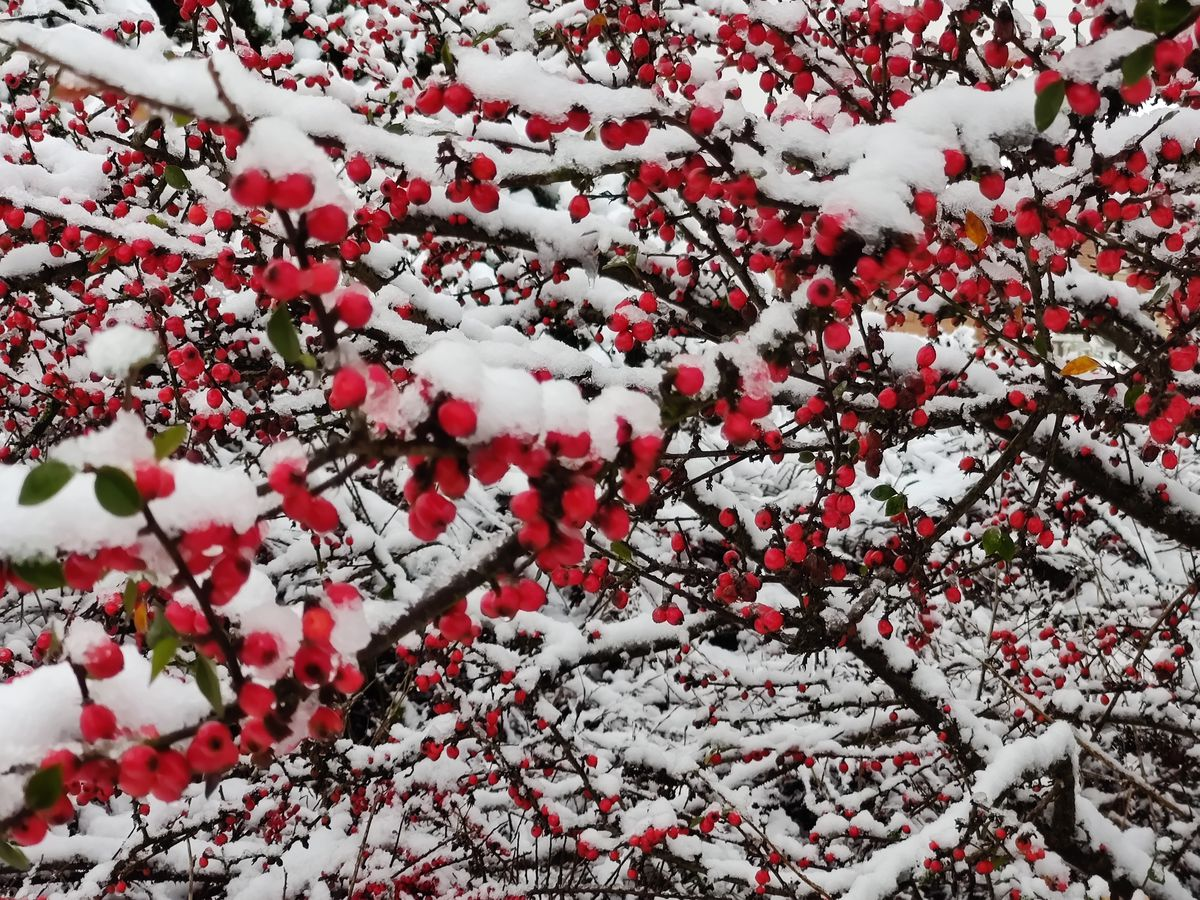 Red and white in Burntwood. Pic: Helen Mee.