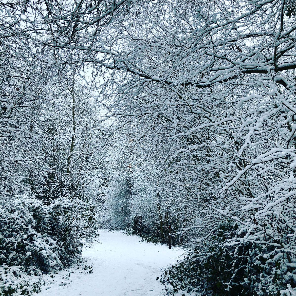 Snow in Brierley Hill. Photo: Ellen Pugsley