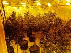 Police raid Black Country cannabis farm with estimated £150,000 street value