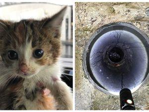 Piper the kitten