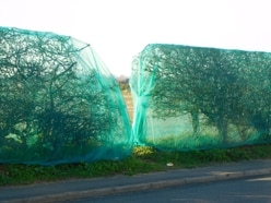 Controversial hedgerow netting removed near homes development after wildlife row