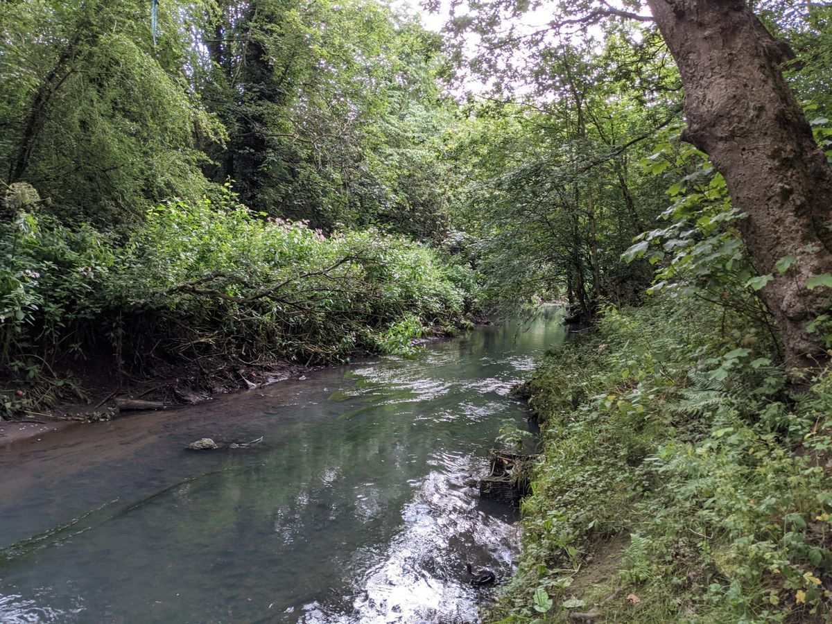 The River Stour has been described as a vital part of the Black Country's network of wildlife sites