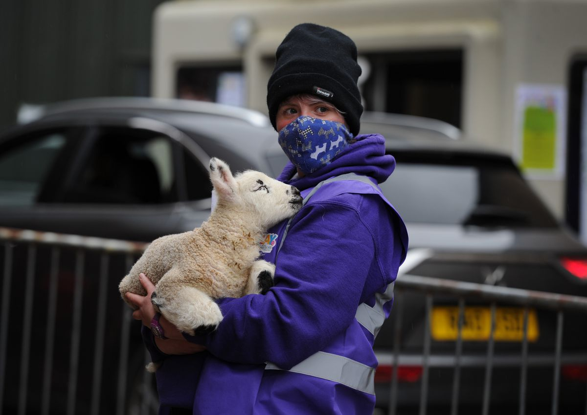 Farm park operator Bex Holden holds a three-day-old lamb