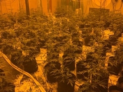 300 cannabis plants found growing in Wolverhampton warehouse