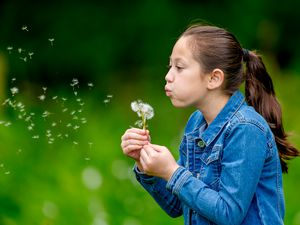 Amber Parkes from Wombourne blowing dandelion seeds at Rifle Range Nature Reserve. Photo by Ian Parkes.