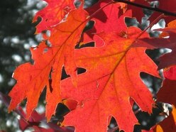 Andy Richardson: Christmas is coming but first, it's autumn