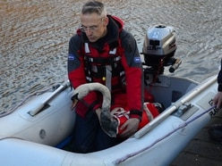 Oil-covered swans rescued after latest Black Country fuel spillage