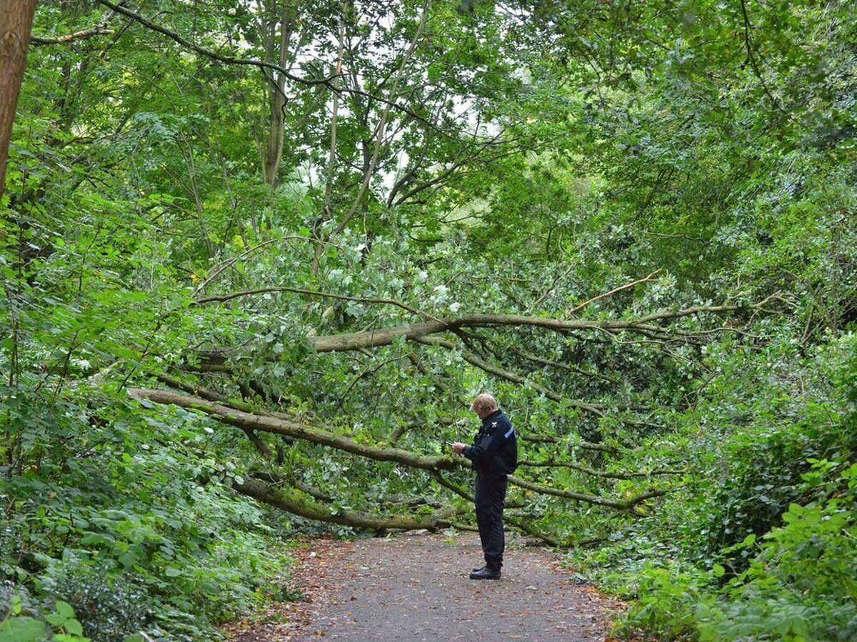 The large tree fell across the pathway known as the Isobel Trail