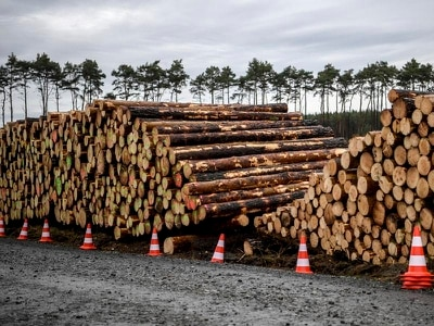 Tesla can fell trees at site of new factory, German court rules