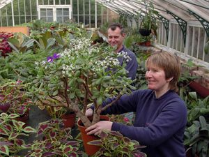 Exotic plant expert Theresa Poppwell is pictured potting a Money Plant alongside Graham Finley in the propogation house of the Victorian conservatory at West Park