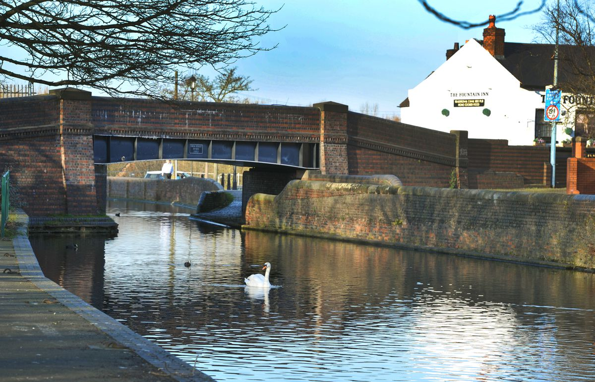 Swans are the main users of the canals once packed with working barges