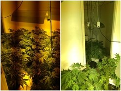 Police raid uncovers £60k worth of cannabis inside Great Barr home