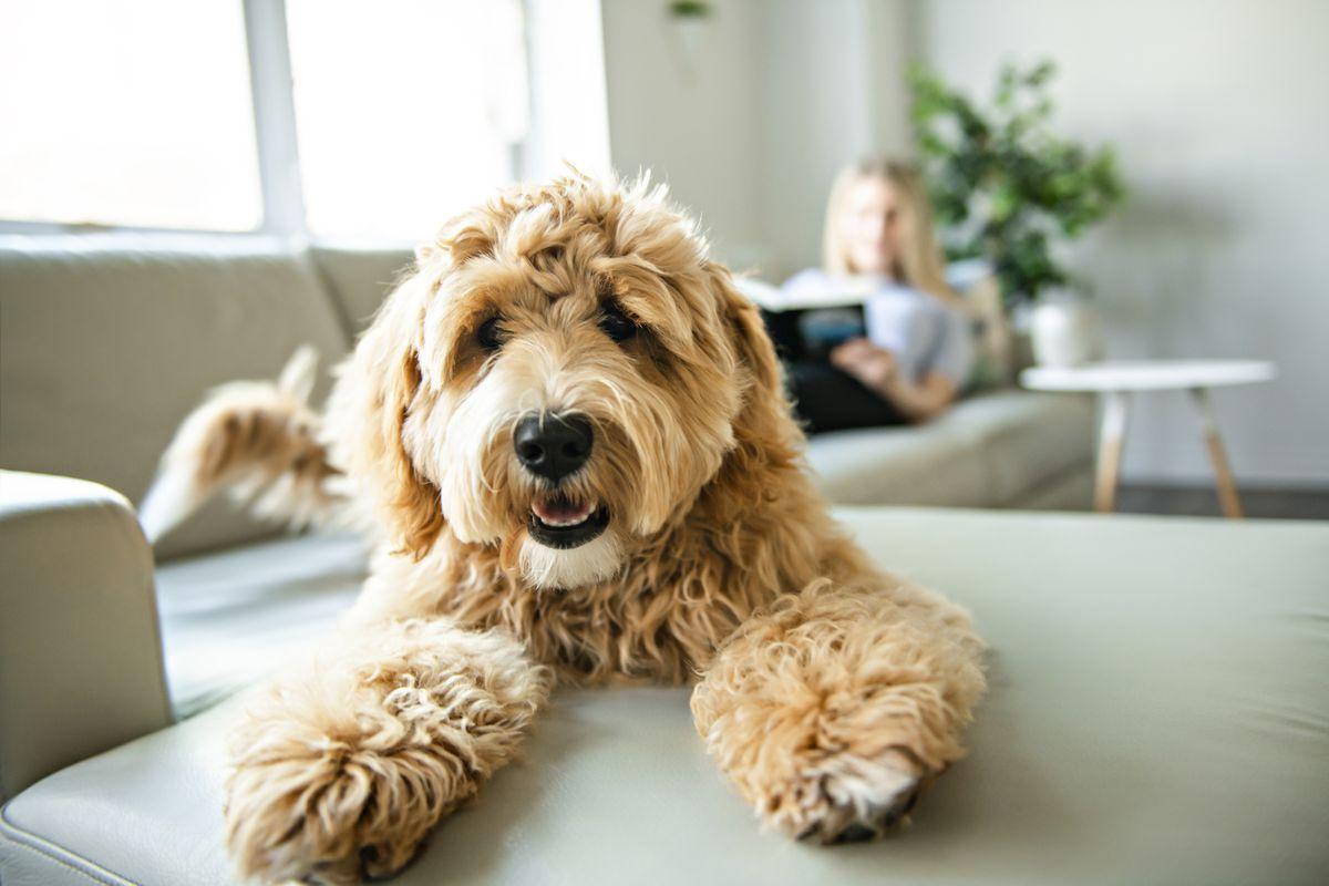Generic stock photo of a pet dog.